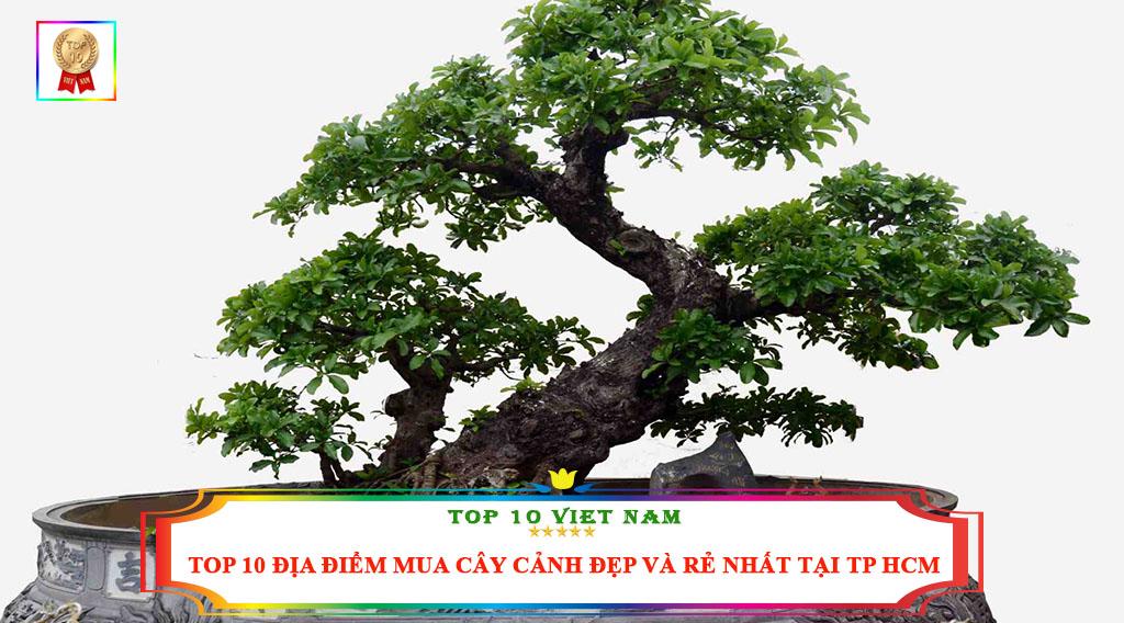 TOP 10 ĐỊA ĐIỂM MUA CÂY CẢNH ĐẸP VÀ RẺ NHẤT TẠI TP HCM