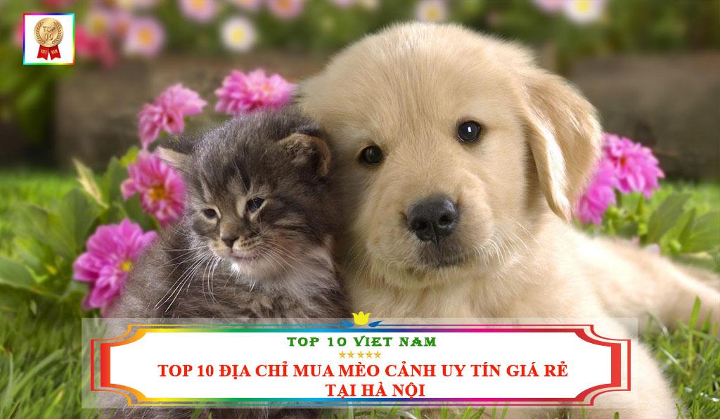 TOP 10 ĐỊA CHỈ MUA MÈO CẢNH UY TÍN GIÁ RẺ TẠI HÀ NỘI