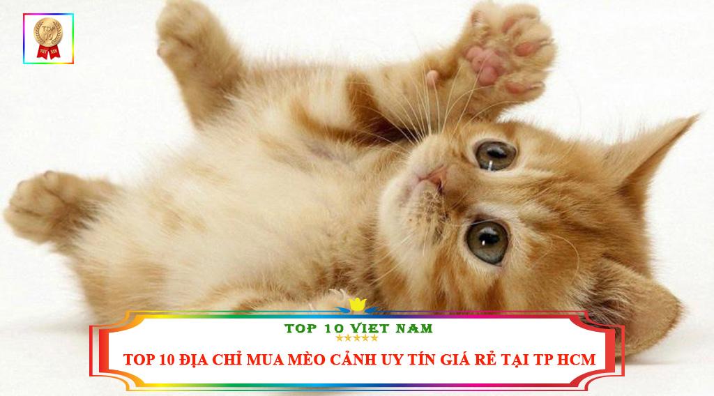 TOP 10 ĐỊA CHỈ MUA MÈO CẢNH UY TÍN GIÁ RẺ TẠI TP HCM